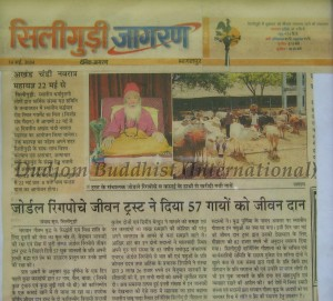 Newspaper Report on the Release of Yaks by HH Chadral Rinpoche (2004)